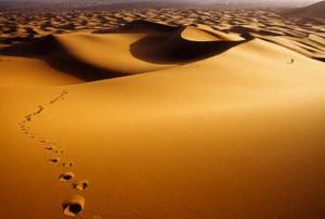 vol_deserto_584px
